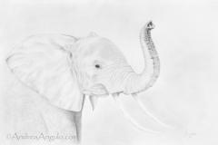 African Elephant #1