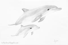 Common Bottlenose Dolphin #1