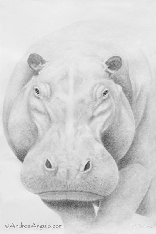 Hippopotamus #1