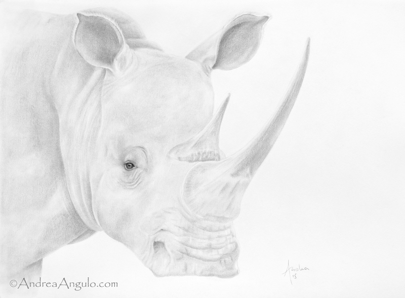 White Rhinocero #1