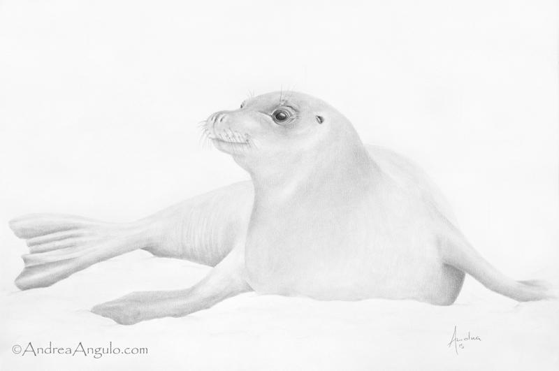 Hawaiian Monk Seal #1