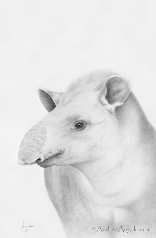 Lowland Tapir #1