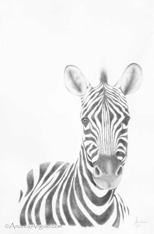 Plains Zebra #2