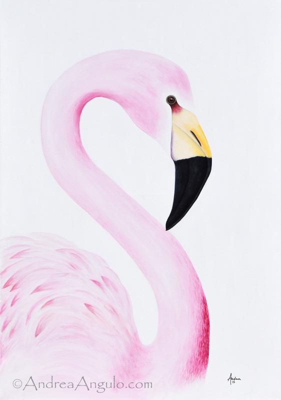 Andean Flamingo #1